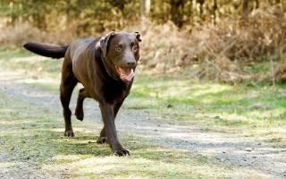 Что нужно знать о радикулите у собак: от причин до нюансов содержания питомца