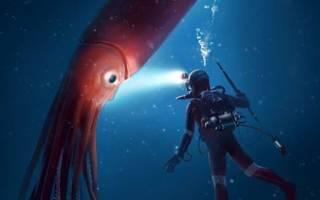 Самые глубоководные существа
