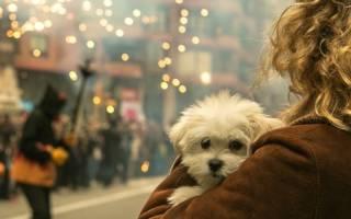 Что делать если собака боится фейерверков: советы экспертов