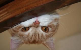 Антигадин для кошек