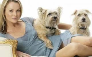 Собачье общение и социальные отношения