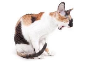 Кот не ест и не пьет, его тошнит: устраняем причину, а не симптомы!