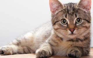 Что делать если глисты у кошек в кале?