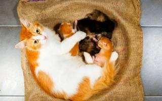 Как понять, что кошка родила всех котят: признаки конца родов