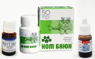 Успокоительное средство: пустырник для кошки
