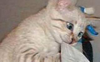 Как и чем лечить сопли у кота