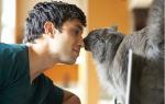 Чесоточный клещ у кошек: лечение дома