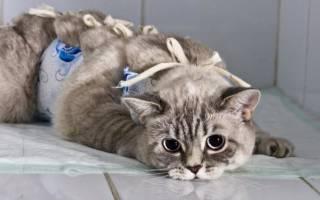 Лечение почечной недостаточности у кошек: проверенная схема