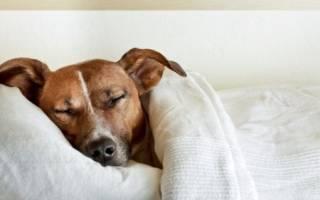 Сотрясение мозга у собак: симптомы и лечение