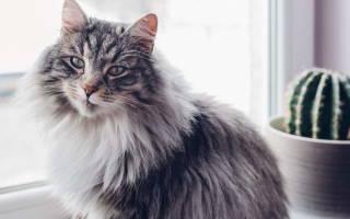 Цирроз печени у кошек и котов