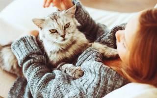 Почему кошка топчет вас лапками: самая достоверная информация!