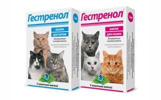 Гестренол – капли и таблетки для кошек и котов