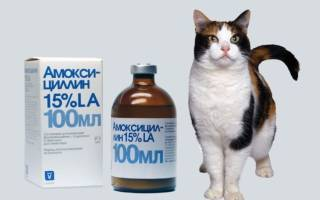 Амоксициллин для кошек: сведения о препарате и показания к применению