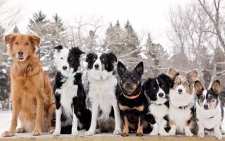 Руководство о том, как узнать, какой породы собака