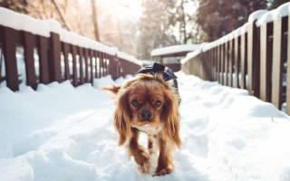 Вестибулярный синдром у собак: причины, симптомы, лечение