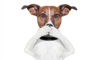 Как убрать запах от собаки