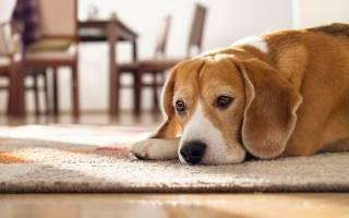 Воспаление у собак