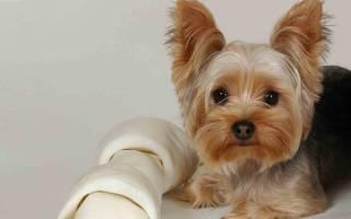 Какие породы собак не пахнут псиной: миф или реальность. Обзор непахнущих пород