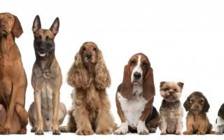 Как выбрать имя собаке: правила и особенности