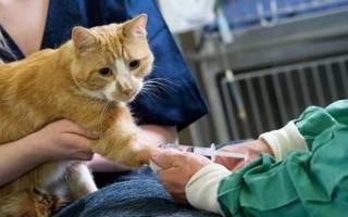 Обезболивающие препараты для кошек