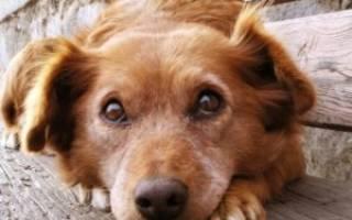 Эффективные обезболивающие для собак