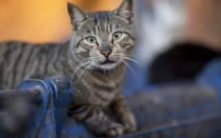 Что делать, если сбежал кот