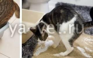 Почему кот часто ходит в туалет