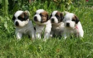 Секреты правильного выбора щенка