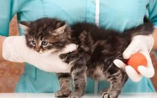 Как сделать клизму котенку дома
