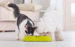 Можно ли кошкам давать собачий корм: все что нужно знать владельцу