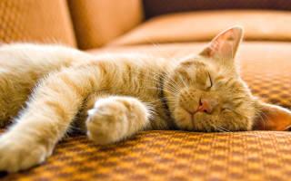 Почему кошки много спят: особенности кошачьего сна и его нарушения