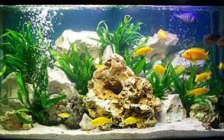 Какая оптимальная температура воды в аквариуме
