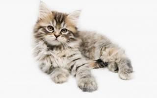Нормальный вес котенка по месяцам: таблица