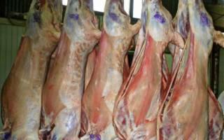 Мясное овцеводство: лучшие мясные породы овец