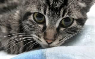 Калифорнийская сияющая кошка: не судите по одежке