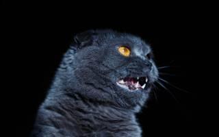 Пирантел: можно ли давать кошкам
