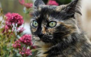 Инфаркт у кошек: симптомы и лечение