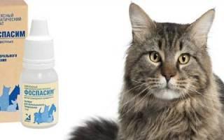 Фоспасим для кошек: описание, назначение, применение