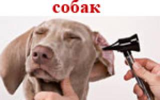 Болезни ушей у собак: причины и основные патологии