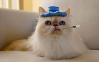 Как поднять кошке температуру