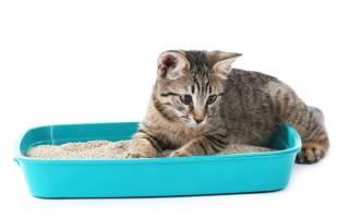 Как приучить котенка к лотку в квартире за 1 день: экспресс-метод