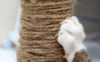 Строение лапы кошки