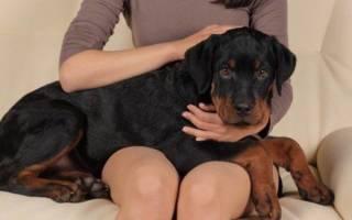 Клизма собаке: простая инструкция