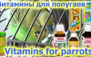 Витамины попугаю