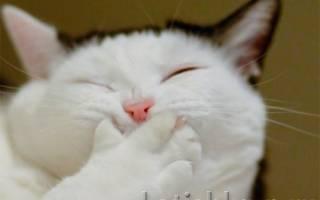 Разбираемся, от чего рвет кота и как помочь питомцу