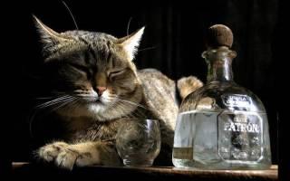 Водка от глистов у кошек: поможет или навредит?