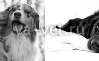 Фибросаркома — всё об опухоли у собак