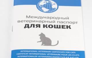 Как сделать паспорт котенку