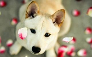 Сколько длится течка у собак? Продолжительность и персональные особенности