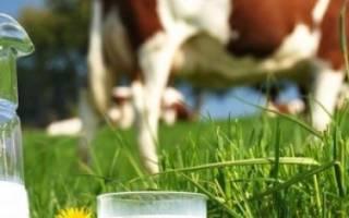 Как, когда и почему корова дает молоко